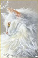 Angel Kitty with golden eyes by Katerina-Art