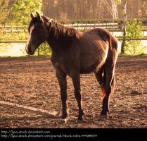 Horse 06 by Lyxa-Stock