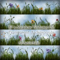 Meadow Textures by roseenglish
