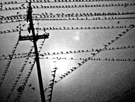 Birds by riona
