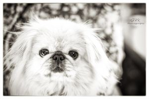 Dog at Biscuit Mill by GraemeBKPhotography
