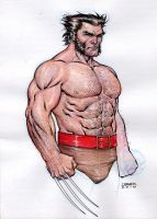 Wolverine - ColorSketch by IbraimRoberson