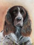 German Spaniel by ArtiaWolf