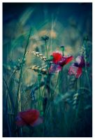 Poppies. I by Lilou1984