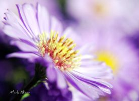 Lilac and gold by Mark-Allison