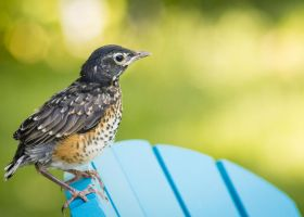 Baby Robin on Chair by Abaddon8k