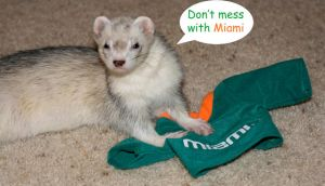 Don't mess with Miami by Dyslexic-Ferret