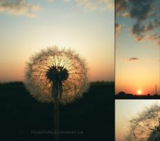 Dandelion Sunset by XFadedToBlackX