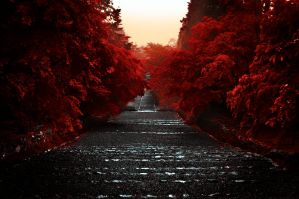 Path Through the Red by DavidNowak