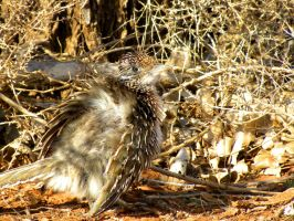 Baby Roadrunner by SuicideBySafetyPin