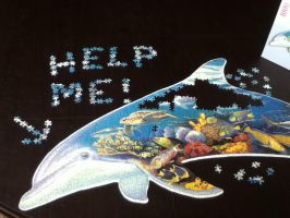 Help the dolphin! by Rockonbrad