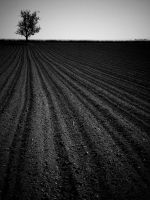 dark field by napoca