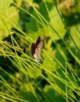 butterfly by florina23