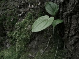 forest corner: wild lily of the valley by snusmumrikenn