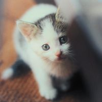 Kitty by PhotoYoung