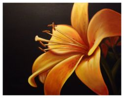 A Lilly for Michelle by bmbtheartman