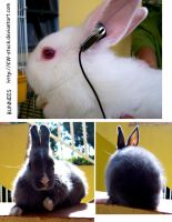 Bunny pack I by KW-stock