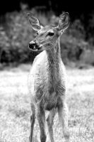 Whitetail Look by Korppi-Clicks