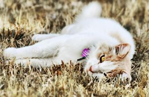 The Life Of A Cat by ibjennyjenny