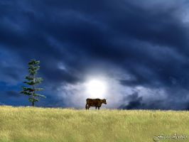 Stray Cow at Sunset by TheFaceArtiste