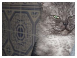 Cats Are Evil by ThatPhotograph