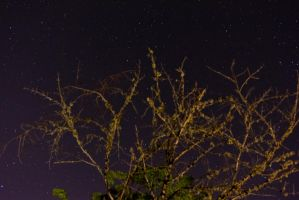 the stars with a blurry tree by intel-4004
