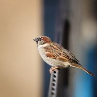 .: A curious Sparrow :. by Frank-Beer