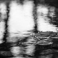 Puddle by Zemni