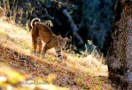 walkabout by kayaksailor