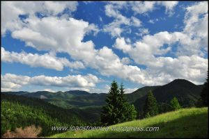 Sky and green by Ioan-Stoenica
