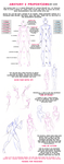 Anatomy + Proportions Tutorial by Clareesi