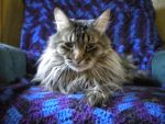 RIP Merlin A good cat and friend by CrazzyStorm