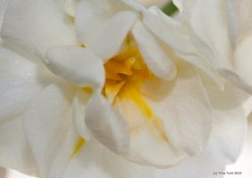 Narcissus by Engelsblut24