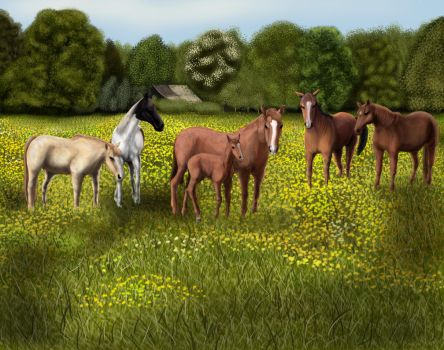 Horses in Field by MoeCorning