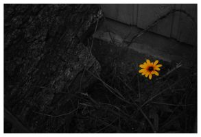 One Bloom in the Darkness by Cwen-Natulcien