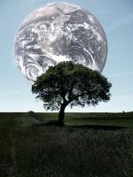 tree earth by Tamile