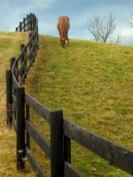 Fence on the Hill: Fall by mostlymade