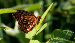 Butterfly on dew drop leaves by Photolover68