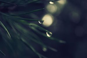 Early morning rain. by Aldith