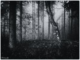 Forest Silence by Weissglut
