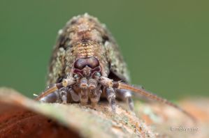 Bristletail by melvynyeo
