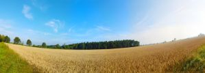 Wheat field by IndependentlyConceal