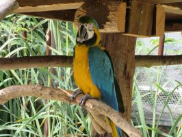 macaw by everyday-im-wumboing