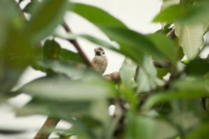 little bird by dianapple