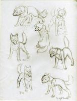 Wolf Character Sketches SotW by KasaraWolf