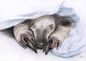 Anteater - Cuteness Overload! by Ankhes-Nur