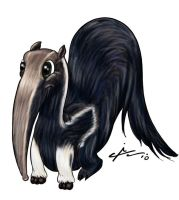 Anteater by AngeloCarvalho