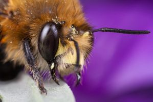 Bee 8 by Alliec