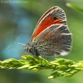 Butterfly by Wnison