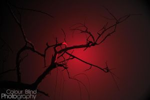 Branches red by ANTHONY1314
